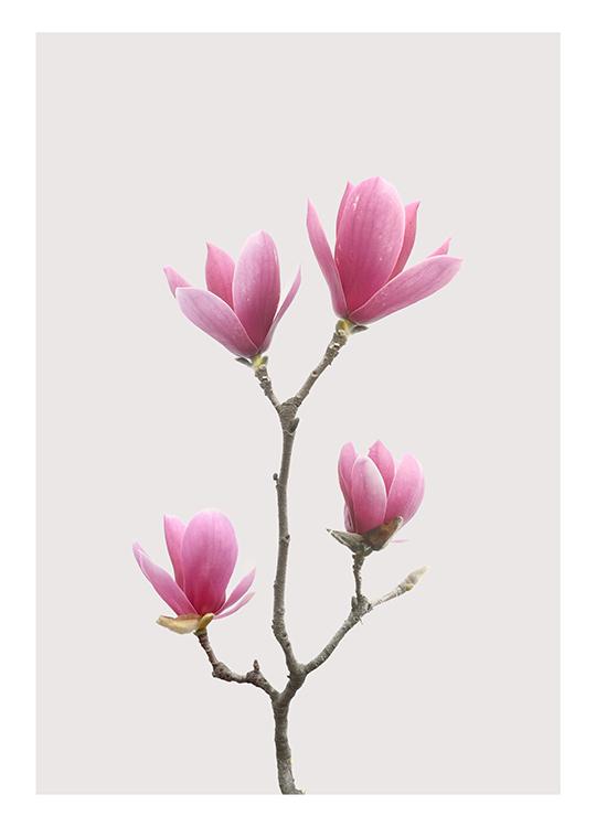 magnolia 1 poster, artroom