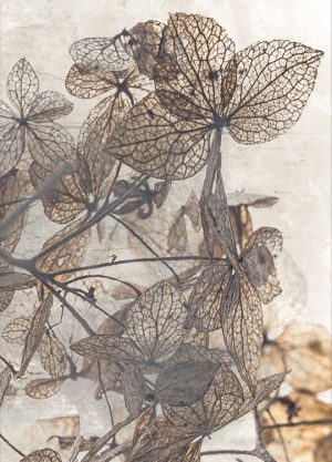 FLOWER DECAY POSTER, artroom