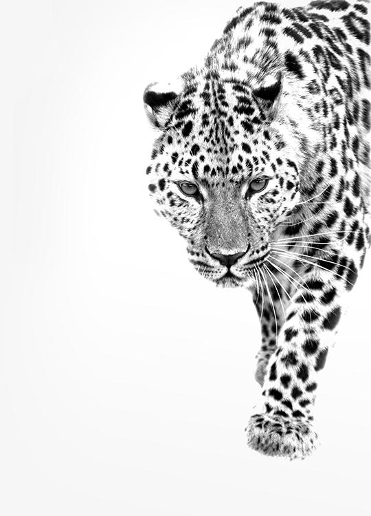 leopard poster, artroom