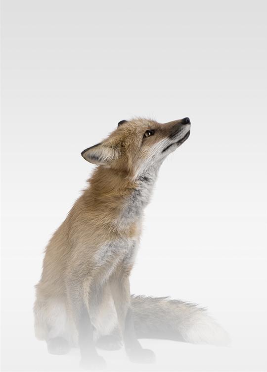 MISTY FOX POSTER