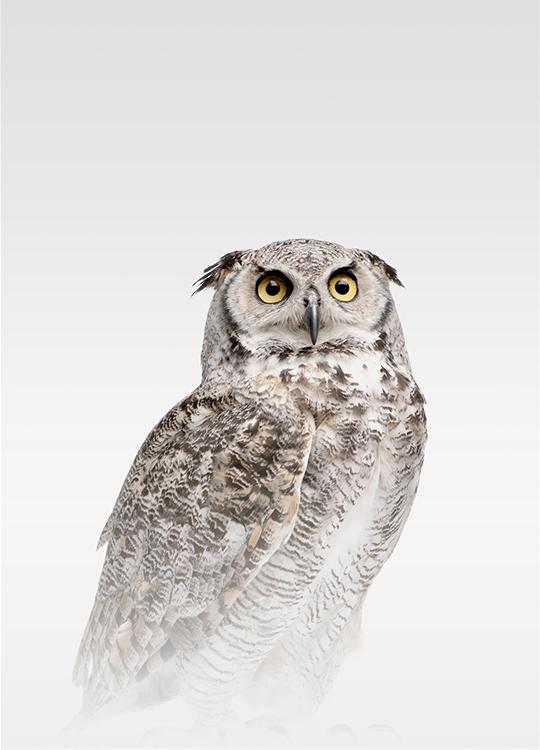 MISTY OWL POSTER, artroom, Artroom, nettgalleri, postere, bilder, rammer, plakater