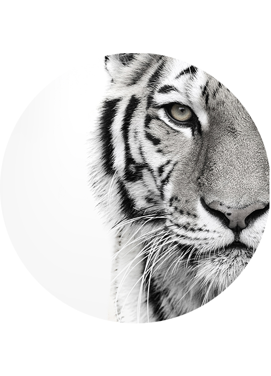 WHITE TIGER CIRCLE ART
