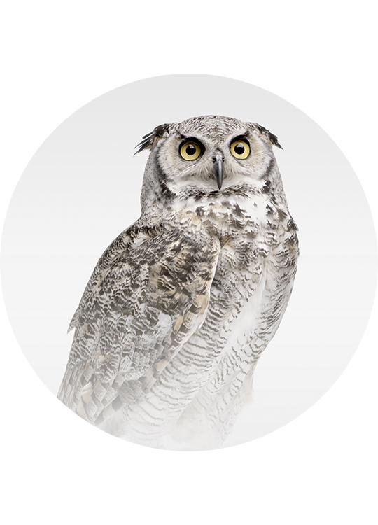 MISTY OWL CIRCLE ART