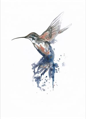 HUMMINGBIRD CORAL POSTER