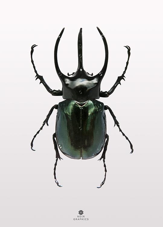 beetle 2 poster, artroom.no
