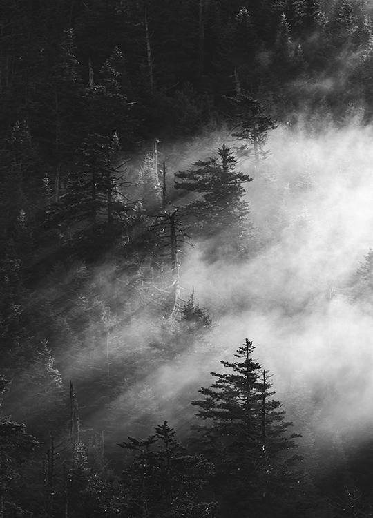 misty pine woods poster, artroom.no