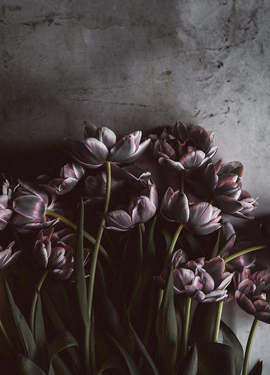 dark tulips poster, artroom.no