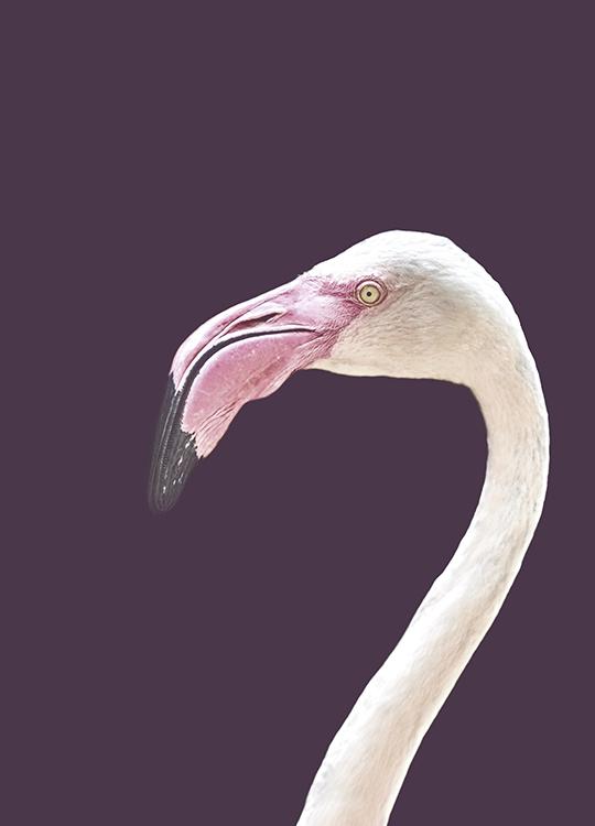 the flamingo poster, artroom.no