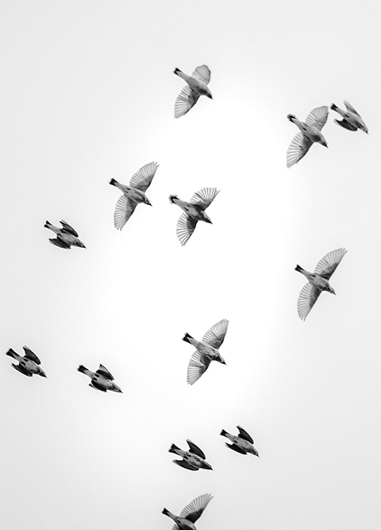 IN THE SKY 1 POSTER