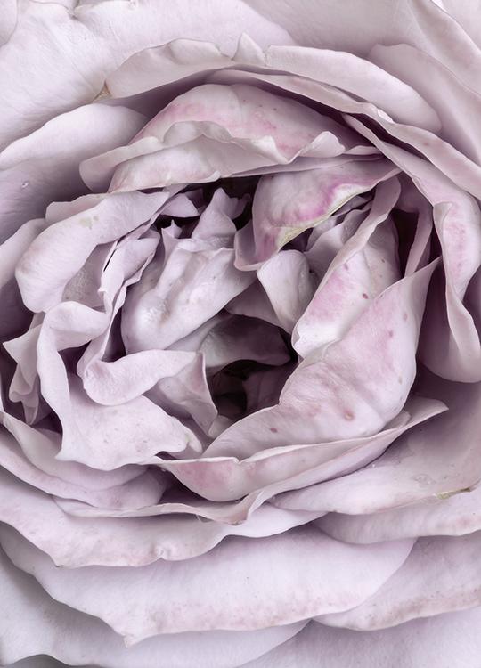 rose heart poster, artroom.no