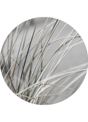 MELLOW GRASSES 1 CIRCLE ART