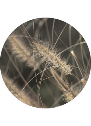 MELLOW GRASSES 2 CIRCLE ART