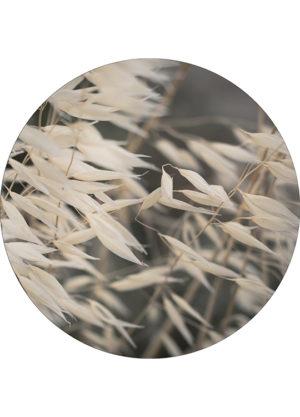MELLOW GRASSES 4 CIRCLE ART