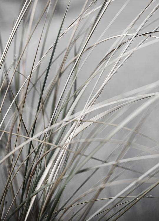 MELLOW GRASSES 1 POSTER, artroom.no